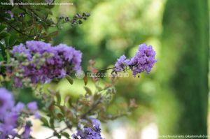 Foto Jardín del Principe 27