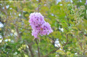 Foto Jardín del Principe 28