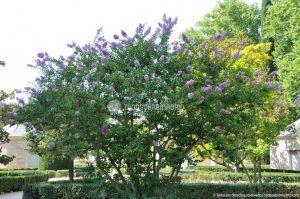Foto Jardín del Principe 29