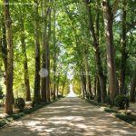 Foto Jardín del Principe 42