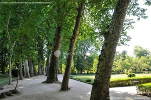 Foto Jardín del Principe 46