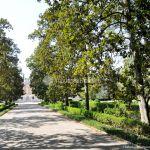 Foto Jardín del Principe 48