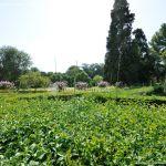 Foto Jardín del Principe 53