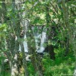Foto Área Recreativa Parque Dehesa de la Acebeda 4