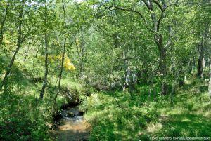 Foto Área Recreativa Parque Dehesa de la Acebeda 6