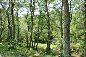 Foto Área Recreativa Parque Dehesa de la Acebeda 11