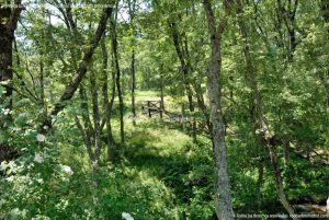 Foto Área Recreativa Parque Dehesa de la Acebeda 12