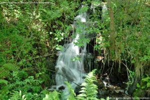 Foto Área Recreativa Parque Dehesa de la Acebeda 24
