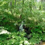 Foto Área Recreativa Parque Dehesa de la Acebeda 25