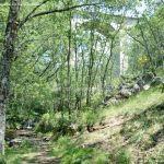 Foto Área Recreativa Parque Dehesa de la Acebeda 32