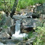 Foto Área Recreativa Parque Dehesa de la Acebeda 33