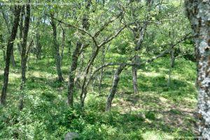 Foto Área Recreativa Parque Dehesa de la Acebeda 39