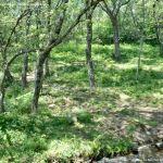 Foto Área Recreativa Parque Dehesa de la Acebeda 41