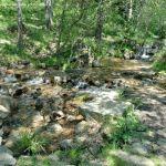 Foto Área Recreativa Parque Dehesa de la Acebeda 42