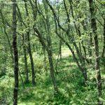 Foto Área Recreativa Parque Dehesa de la Acebeda 45