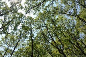 Foto Área Recreativa Parque Dehesa de la Acebeda 46