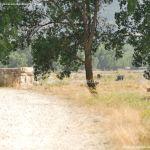 Foto Ganado en Alameda del Valle 1
