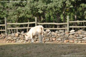 Foto Ganado en Alameda del Valle 13
