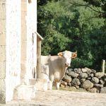 Foto Ganado en Alameda del Valle 16