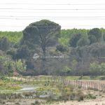 Foto Río Perales en Aldea del Fresno 2
