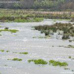 Foto Río Perales en Aldea del Fresno 11