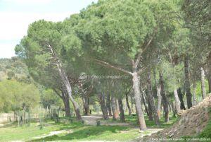 Foto Parque Río Perales en Aldea del Fresno 3