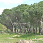 Foto Parque Río Perales en Aldea del Fresno 5