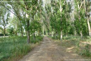 Foto Zona Recreativa Dehesa de Anchuelo 4