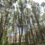 Foto Parque Forestal La Dehesa de Anchuelo 3