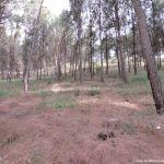 Foto Parque Forestal La Dehesa de Anchuelo 4