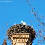 Foto Cigüeñas en Boadilla del Monte 3