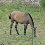 Foto Caballo en Cabanillas de la Sierra 3