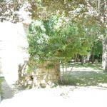 Foto Parque Carlos Manzanares 5