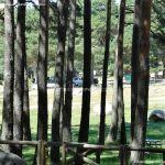 Foto Área Recreativa Puerto de Canencia 22