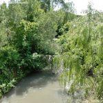 Foto Río Tajuña en Carabaña 2