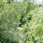 Foto Río Tajuña en Carabaña 3