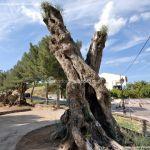Foto Parque de los Olivos en Carabaña 3
