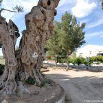Foto Parque de los Olivos en Carabaña 5