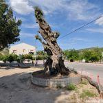 Foto Parque de los Olivos en Carabaña 6