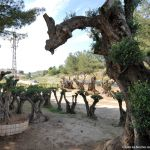 Foto Parque de los Olivos en Carabaña 7