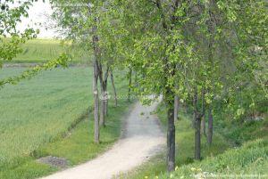 Foto Parque de la Ribera 10