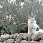 Foto Caballo en Chapinería 10