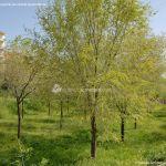 Foto Parque de la Ermita en Colmenar de Oreja 2