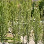 Foto Parque de la Ermita en Colmenar de Oreja 4