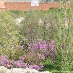 Foto Parque de la Ermita en Colmenar de Oreja 5