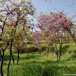 Foto Parque de la Ermita en Colmenar de Oreja 12