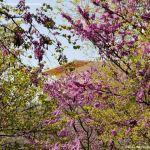 Foto Parque de la Ermita en Colmenar de Oreja 13