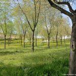 Foto Parque de la Ermita en Colmenar de Oreja 18