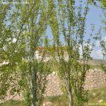 Foto Ermita de San Isidro de Colmenar de Oreja 16