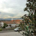 Foto Acebo en Colmenarejo 1